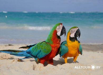Яркая природа Доминиканы