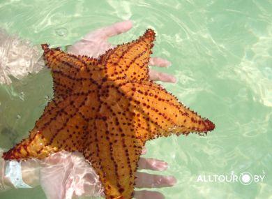 Обитатели прибрежных вод. Доминикана