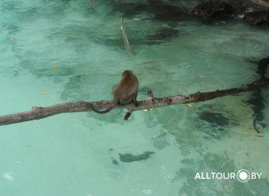 Экскурсии в Таиланде