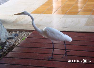 На территории отелей в Доминикане множество птиц