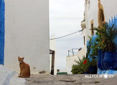 Просто марокканский котик