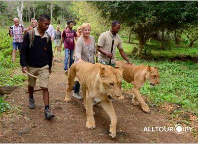 Маврикий прогулка со Львами